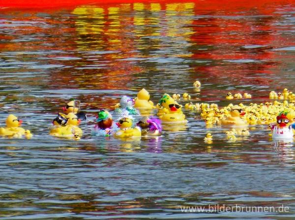 """Große, liebevoll gestaltete """"Big Ducks"""" und kleine Enten auf ihrem Weg zum Ziel"""